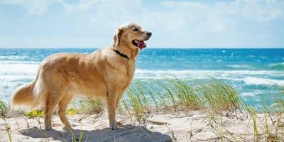 Le misure di Regioni e Comuni per i cani in spiaggia