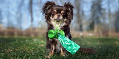 Lo que debes saber sobre las bolsas biodegradables para excrementos de perro