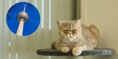 10 Katzenpensionen in Berlin für den nächsten Urlaub ohne Stubentiger