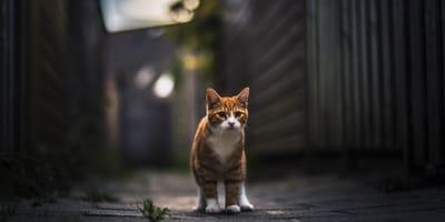 gato callejón
