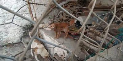 perros encerrados entre trastos viejos jaen
