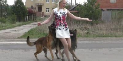 Dwa owczarki z opiekunka tancza