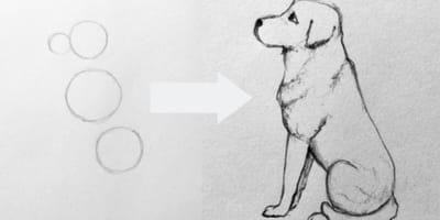 Cómo dibujar un perro a partir de 4 círculos