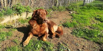 brown mixed breed dog laying on the ground