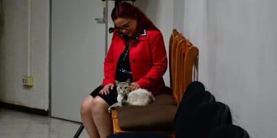 gato oficinas
