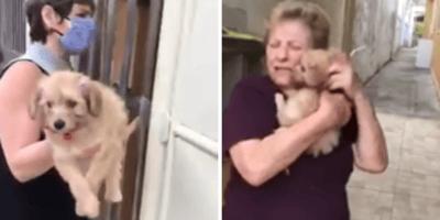 Kobieta dostaje szczeniaka.