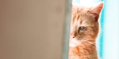 Trauer und Tränen: Können Katzen weinen?