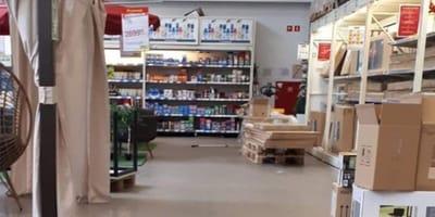 Troje kociąt wchodzi do supermarketu Makro: pracownicy nie wiedzą, co robić