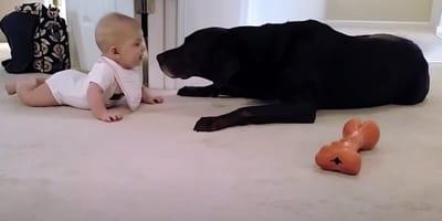 Maluch próbuje zbliżyć się do psa. Reakcja czworonoga jest urocza