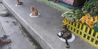 <p>Grupa kot&oacute;w zajęła kolejne kręgi wymalowane na chodniku</p>