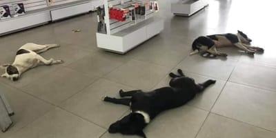 perros tienda electrónicos