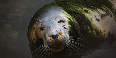foca mini zoo santander repleta musgo