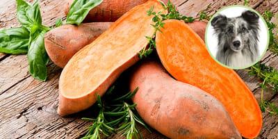 Süßkartoffeln für Hunde