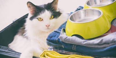 gatto-dentro-valigia