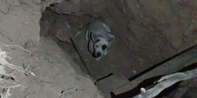 perrita rescatada de un hoyo en Aguascalientes