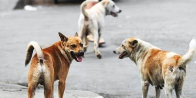 Adottati poi abbandonati: il triste caso dei cani in Israele