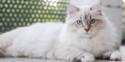 Katzenpensionen in Hamburg: Zehn gute Adressen