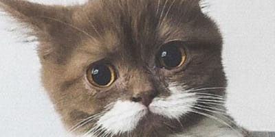 brown cat with white moustache