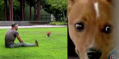 brown puppy approaching man sitting on grass