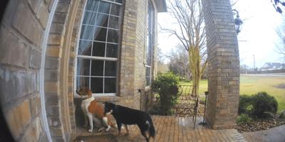 due cani fuori la porta di casa