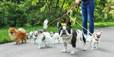 Wie viele Hunde leben eigentlich in Deutschland?