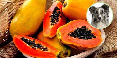 Papaya für Hunde