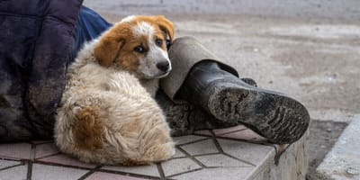 Watch: Homeless man and his dog prove happiness has nothing to do with money