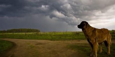 <p>Jak uspokoić psa, kt&oacute;ry boi się burzy?</p>
