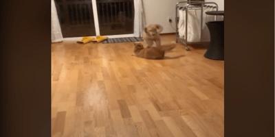 Imposible contener la risa al ver lo que hacen este perro y su amigo gatuno