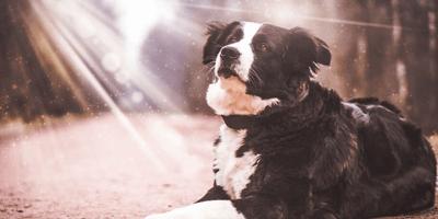 Sexto sentido en perros: ¿verdad o mito?