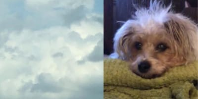 clouds and small dog's face