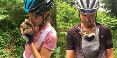 Rescued tortoiseshell kitten