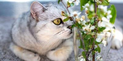 I gatti annusano tutto: questione di chimica