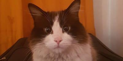 gato vende esquites para el veterinario