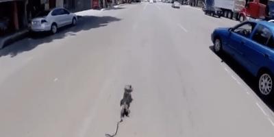 Perro video viral avenida revolucion