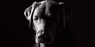 perro tristeza