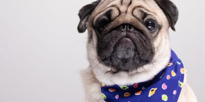 How to recognise symptoms of salmonella poisoning in pets