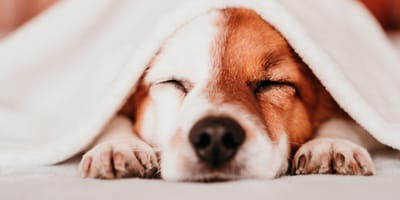Should I worry if my dog snores?