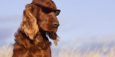 Can dogs get sunburn?