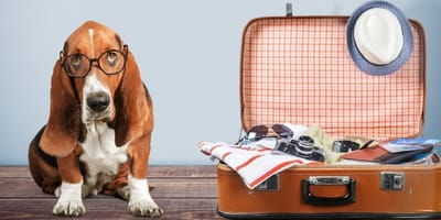 How to travel long distance with a dog