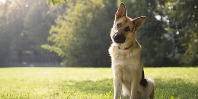 What is kaolin and what effect does it have on dogs?