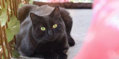Katzenbetreuung in Leipzig: Acht wertvolle Adressen