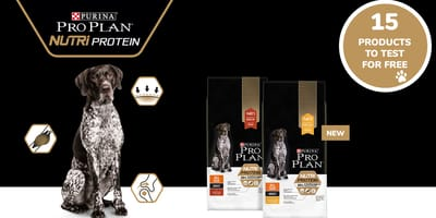 german shorthaired pointer sitting next to bag of PRO PLAN Nutriprotein kibble