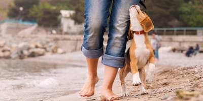 perro oliendo a su amo