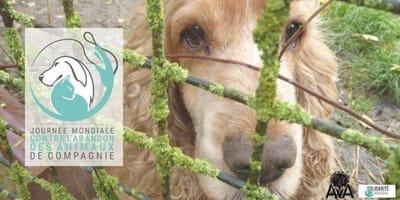 Dziś obchodzimy Światowy Dzień Przeciwko Porzucaniu Zwierząt Domowych