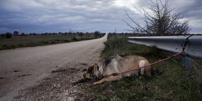 perro atado abandonado carretera
