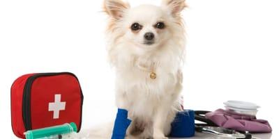 kit de urgencias para mascotas