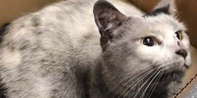 <p>Blitz spędził 7 godzin uwięziony między torami, tuż pod pędzącymi pociągami metra! (źr&oacute;dło: facebook.com/blessedcats)</p>