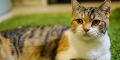 <p>Kocie matki często adoptują osierocone kociaki, a nawet inne młode zwierzęta.&nbsp;</p>