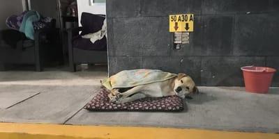 perro gasolinera
